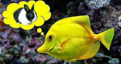 un_pez_debe_ser_pez