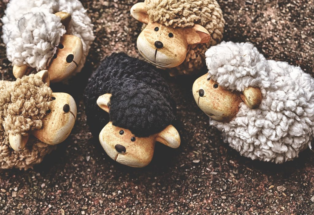 ovejas blancas y tostadas alrededor de una oveja negra